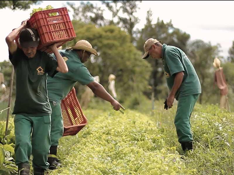 Produtos organicos certificados sao colhidos
