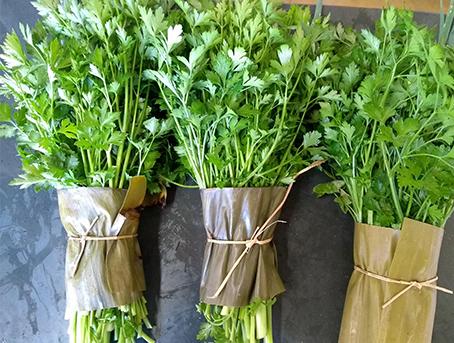cheiro-verde-organico
