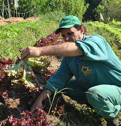 agricultor-de-horta-organica